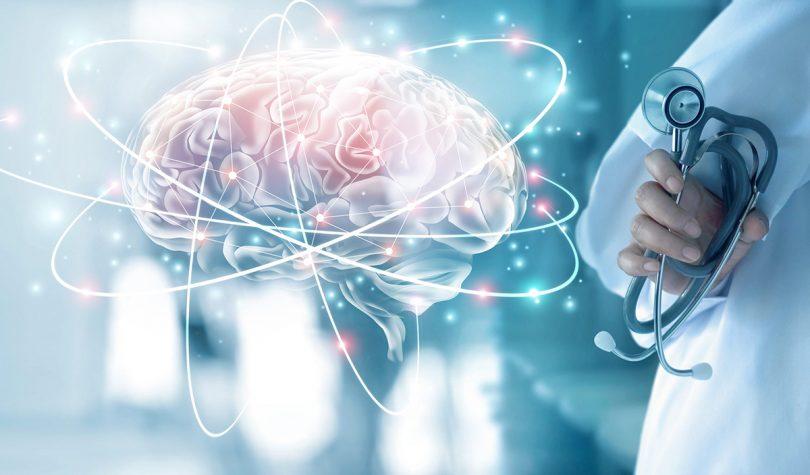 cerveau fonctionnement